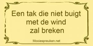 Een tak die niet buigt met de wind zal breken