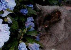 katten en gezegden